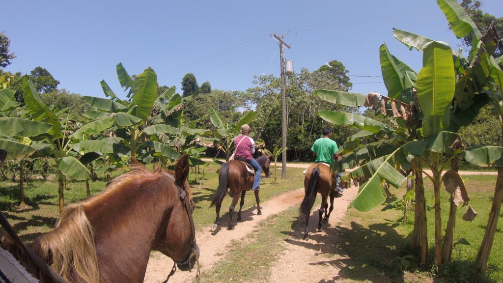 horse back riding-Drift Inn Belize