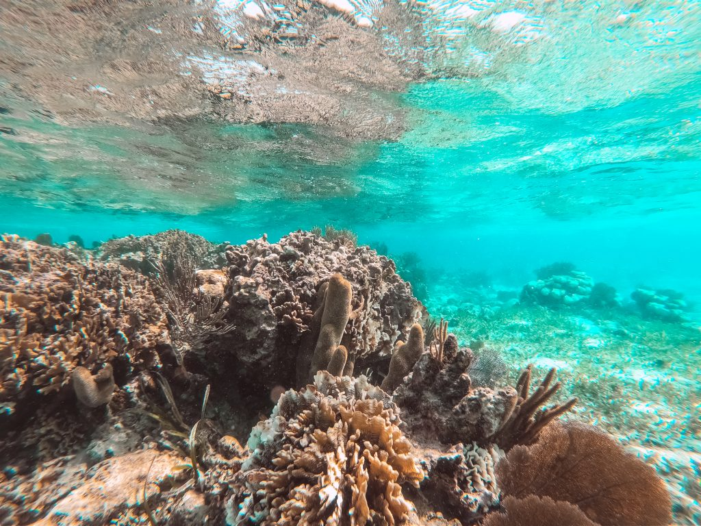 Hol-Chan Marine Reserve San Pedro Belize