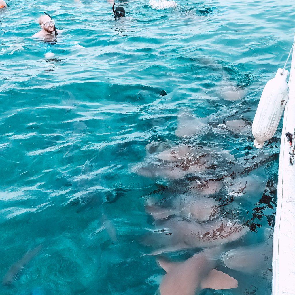 nurse-sharks-hol-chan-reserve-belize